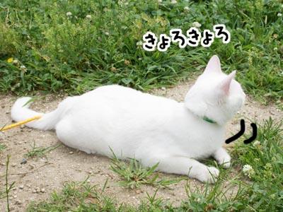 cat449