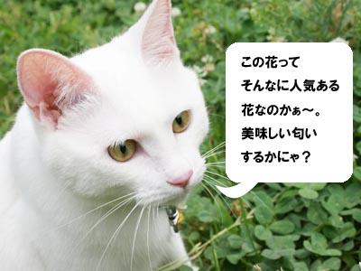 cat453