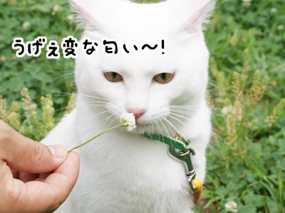 cat454