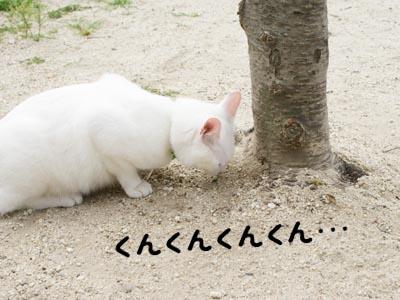 cat455