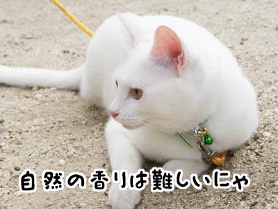 cat457