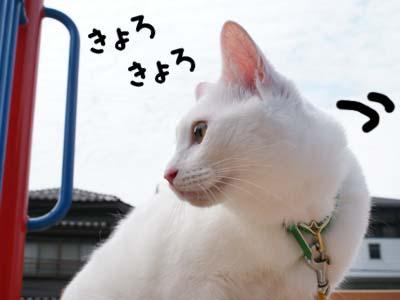 cat458
