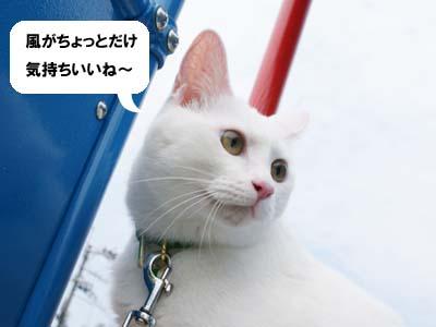 cat459