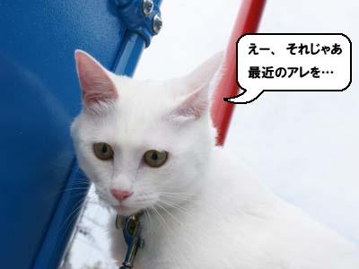 cat460