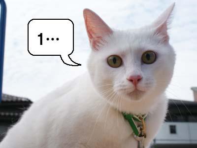 cat461