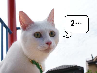 cat462