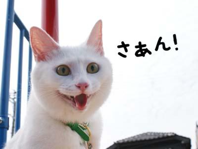 cat463