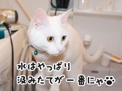 cat466