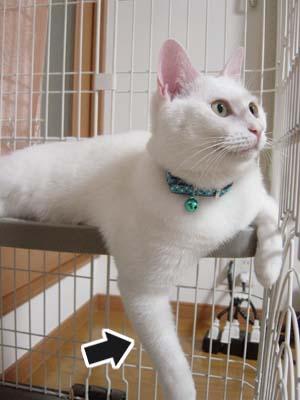cat467