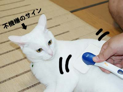cat468