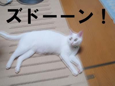 cat475