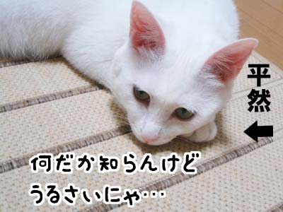 cat476