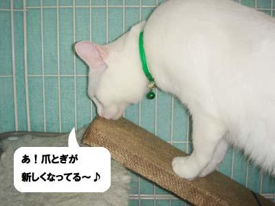cat481