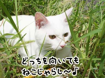 cat483