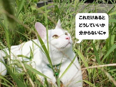cat484