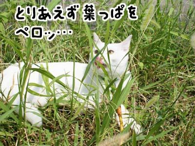 cat485