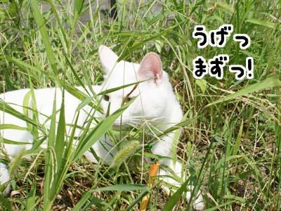 cat486