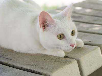 cat487