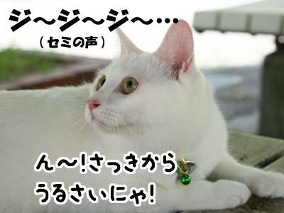 cat488