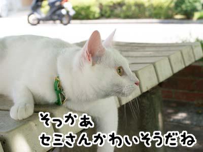 cat490