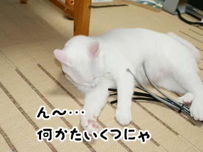 cat492