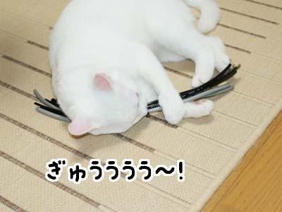 cat493