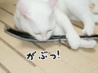 cat494