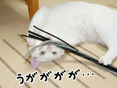 cat495