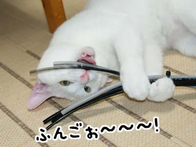 cat496