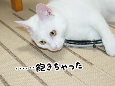 cat497