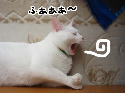 cat502