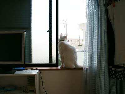 cat509