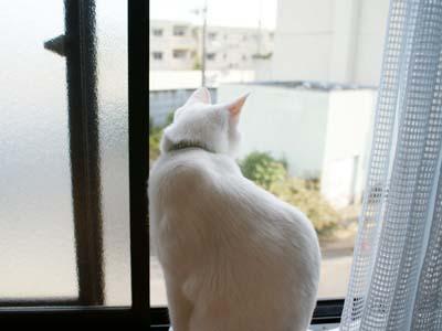 cat510