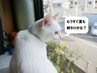 cat511