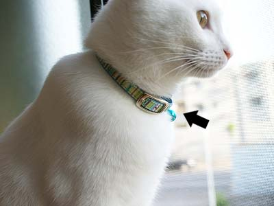 cat512