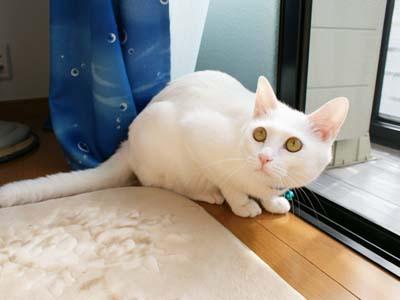 cat514