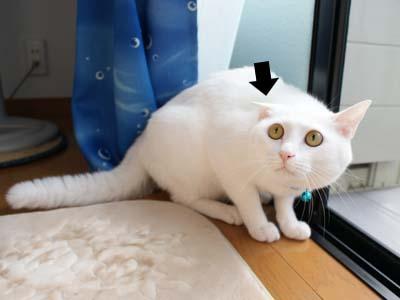 cat515