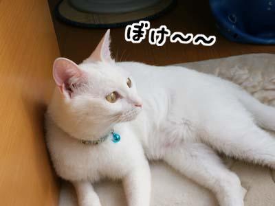 cat517
