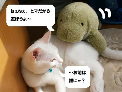 cat518