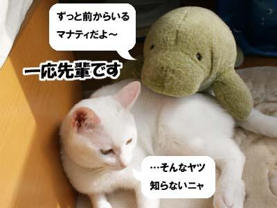 cat519