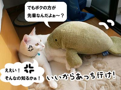 cat520