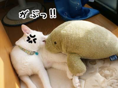 cat521