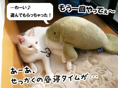 cat522