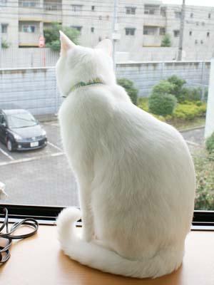 cat523