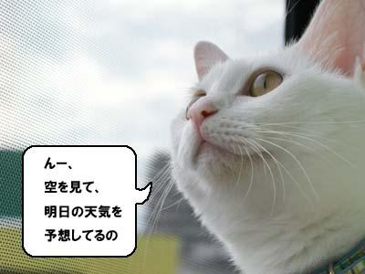 cat524