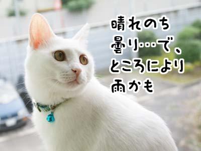 cat525