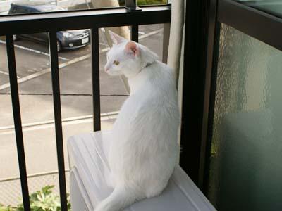 cat526