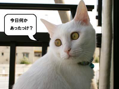 cat527