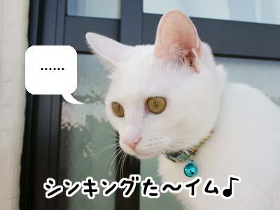 cat528