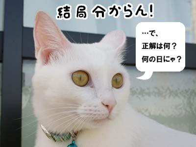 cat529